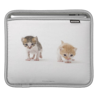 Two kittens on white background iPad sleeve