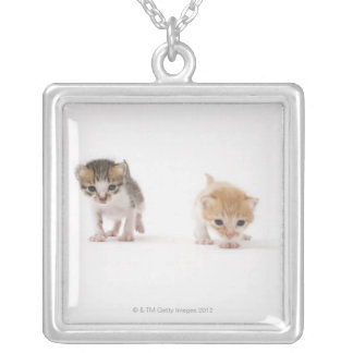 Two kittens on white background silver plated necklace