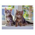 Two Kittens Post Cards