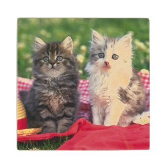 Two Kittens Sitting On A Red-Colored Blanket Wood Coaster