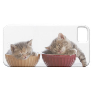 Two Kittens Sleeping in Bowls iPhone 5 Cover