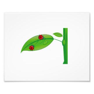 Two ladybugs on green leaf stem eco design.png art photo