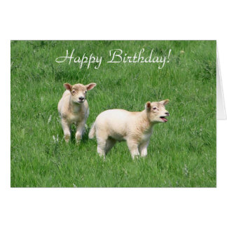 Two Lambs Card