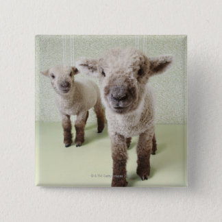 Two Lambs Indoors with Floral Wallpaper 15 Cm Square Badge