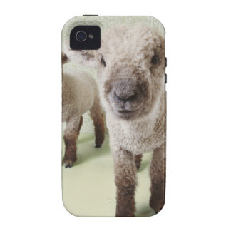 Two Lambs Indoors with Floral Wallpaper Vibe iPhone 4 Cases