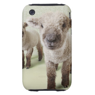 Two Lambs Indoors with Floral Wallpaper iPhone 3 Tough Cover