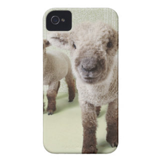 Two Lambs Indoors with Floral Wallpaper iPhone 4 Case-Mate Cases