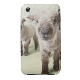 Two Lambs Indoors with Floral Wallpaper iPhone 3 Case-Mate Cases