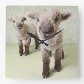 Two Lambs Indoors with Floral Wallpaper Square Wall Clock