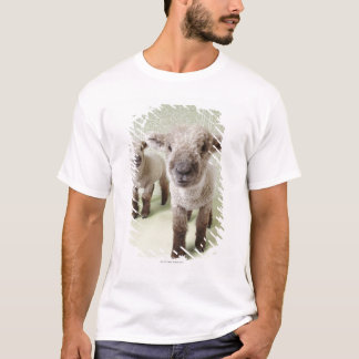Two Lambs Indoors with Floral Wallpaper T-Shirt