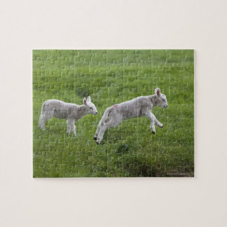 Two Lambs Jigsaw Puzzle