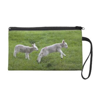 Two Lambs Wristlet Purses