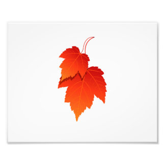two leaves in fall colours.png photo