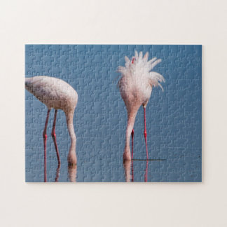 Two Lesser Flamingos (Phoenicopterus Minor) Feed Jigsaw Puzzle