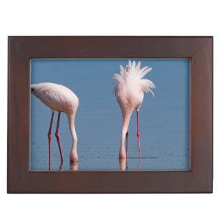 Two Lesser Flamingos (Phoenicopterus Minor) Feed Keepsake Box