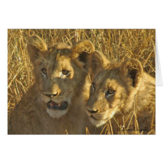 Two Lion Cub Faces Card