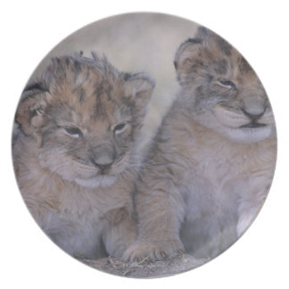 Two Lion Cubs Plate