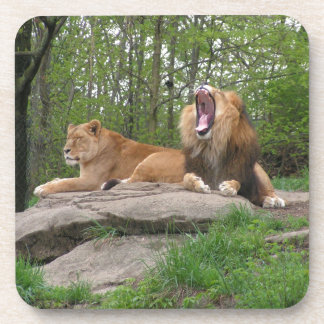 Two Lions Coaster