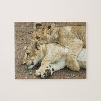 Two lions cubs playing. jigsaw puzzle