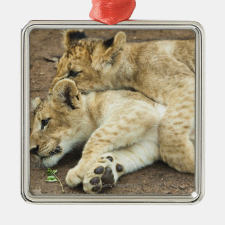 Two lions cubs playing. Silver-Colored square decoration