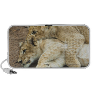 Two lions cubs playing. iPhone speaker
