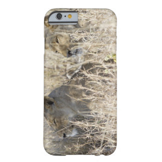 Two lions hidden in dry grass, Kruger National Barely There iPhone 6 Case