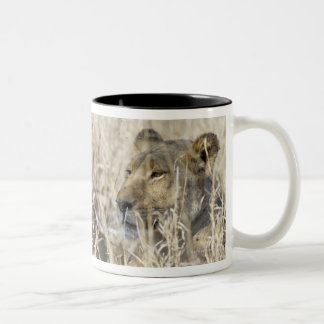 Two lions hidden in dry grass, Kruger National Two-Tone Coffee Mug