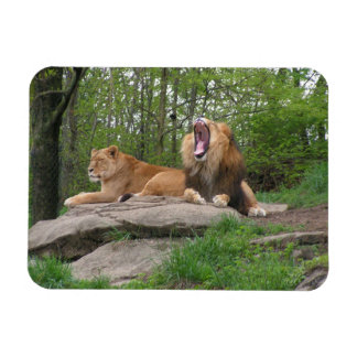 Two Lions Rectangular Photo Magnet