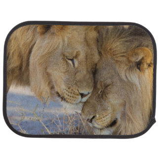 Two Lions rubbing each other Car Mat