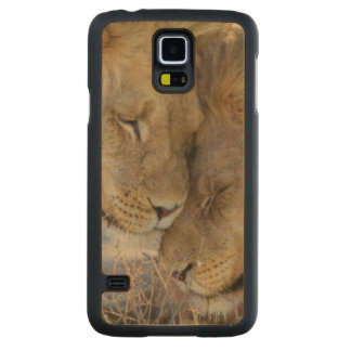 Two Lions rubbing each other Carved Maple Galaxy S5 Case