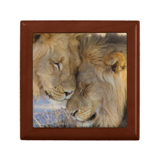 Two Lions rubbing each other Gift Box