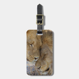Two Lions rubbing each other Luggage Tag