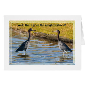 Two Little Blue Herons and an Alligator Card