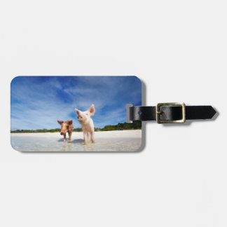 Two little piglets luggage tag