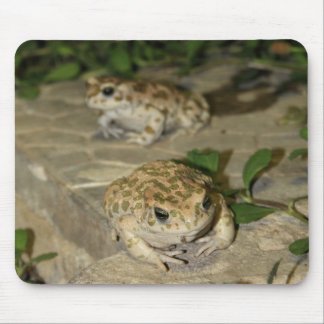 Two little toads - green frog print mouse pad