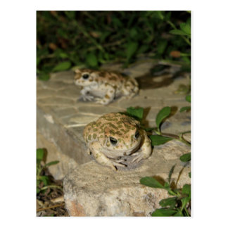 Two little toads - green frog print postcard