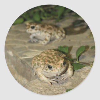 Two little toads - green frog print round sticker