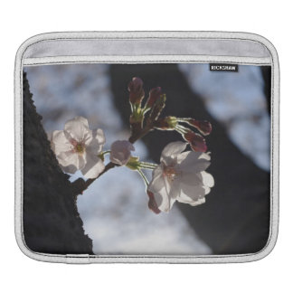 Two lonely cherry blossoms and sunlight sleeves for iPads