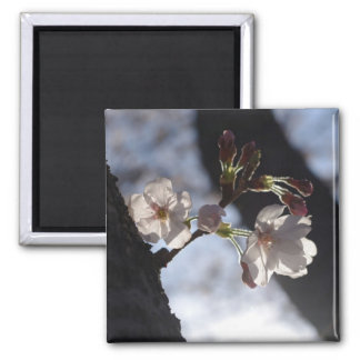 Two lonely cherry blossoms and sunlight square magnet