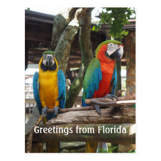 two macaw or parrot birds postcard
