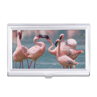 Two Male Lesser Flamingos (Phoenicopterus Minor) Business Card Holder