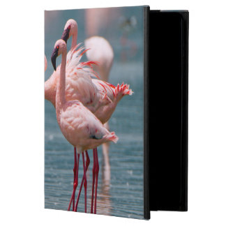 Two Male Lesser Flamingos (Phoenicopterus Minor) iPad Air Cover