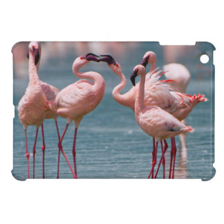 Two Male Lesser Flamingos (Phoenicopterus Minor) iPad Mini Case