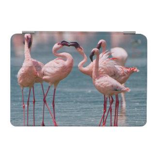 Two Male Lesser Flamingos (Phoenicopterus Minor) iPad Mini Cover