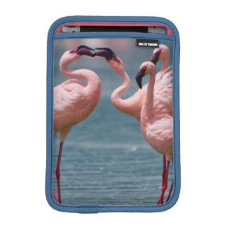 Two Male Lesser Flamingos (Phoenicopterus Minor) iPad Mini Sleeve
