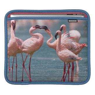 Two Male Lesser Flamingos (Phoenicopterus Minor) iPad Sleeve