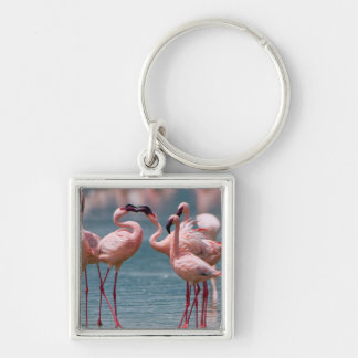 Two Male Lesser Flamingos (Phoenicopterus Minor) Key Ring