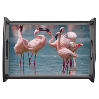 Two Male Lesser Flamingos (Phoenicopterus Minor) Serving Tray