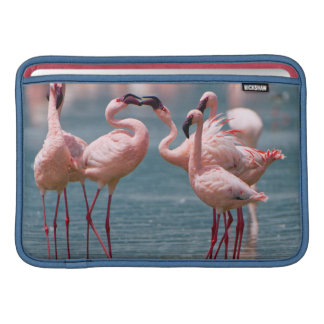 Two Male Lesser Flamingos (Phoenicopterus Minor) Sleeve For MacBook Air