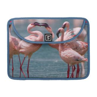 Two Male Lesser Flamingos (Phoenicopterus Minor) Sleeve For MacBooks